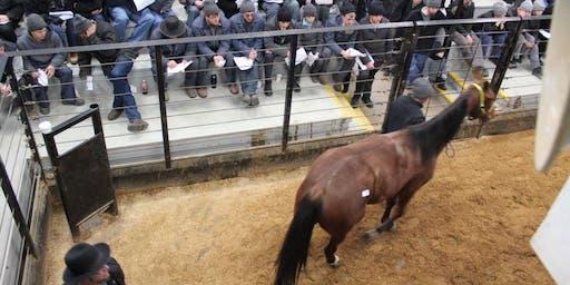 Shipshewana Standardbred Horse Sale