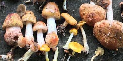 Intro+To+Mycology%3A+The+World+of+Fungi%2C+Myceli