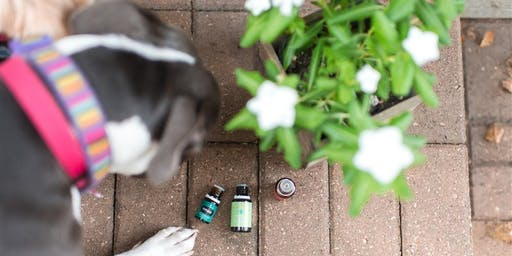 Essential Oils for your Furry Friends