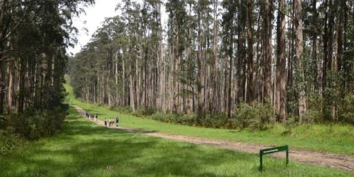 Tanglefoot 11km Circuit Half Day Hike on the 25th of August, 2019