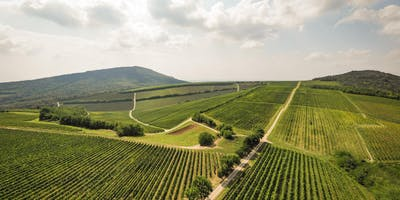 The two faces of the Villány wine region