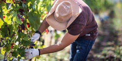 Ungarn: Weinland mit Tradition und einer Vielzahl von autochthonen Sorten