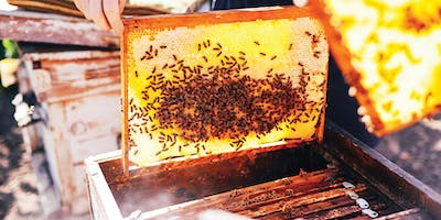 Bee School 2019: Intro to Beekeeping Taster Sessions