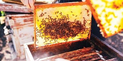 Bee School 2019: Intro to Beekeeping Taster Sessio