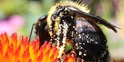 Harriton's Beekeeping & Honey Festival 2019