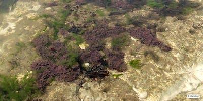 Big Seaweed Search at Kingsgate