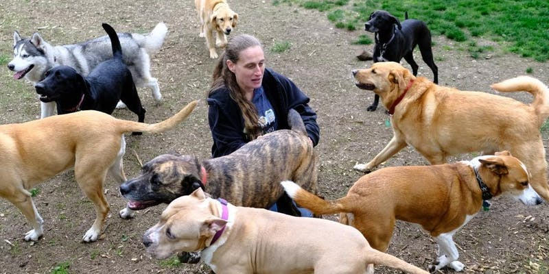 Lauren Rick and her dogs