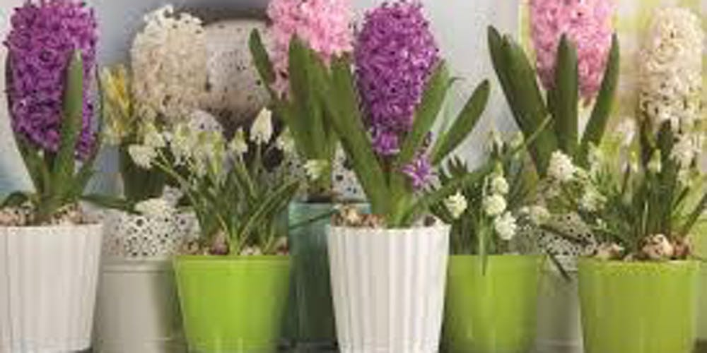 Design Your Own Spring Bulb Bloom Garden Tickets, Thu, Apr 11, 2019 at 6:00 PM | Eventbrite