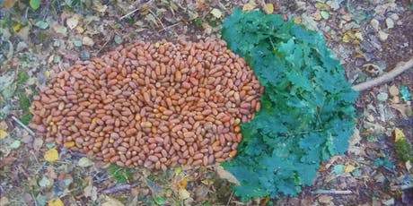 Acorns and Oak: Foraging, cooking, eating, preserving. tickets