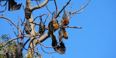 Bush Explorers - A Night with the Bats - Milton Park