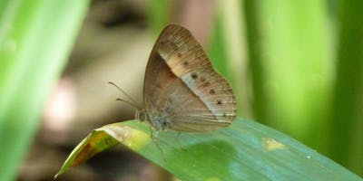 Bush Explorers - Autumn Alamanac - Noorumba Reserve