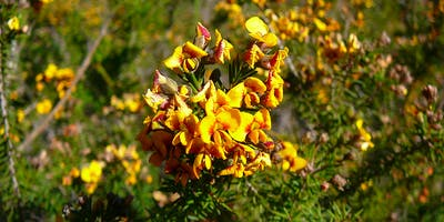 Bush Explorers - Weeds & Natives ID workshop