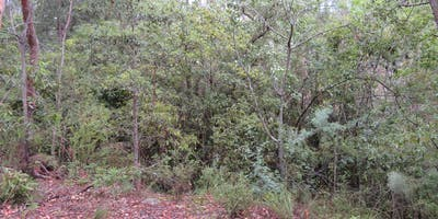 Bush Explorers - Autumn Almanac - Smiths Creek Reserve