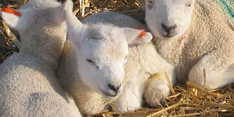 Broomfield Hall - Lambing Sunday tickets