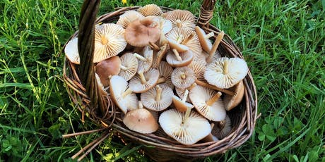 Norfolk, Holt, Wild Food Foraging Course Walk tickets