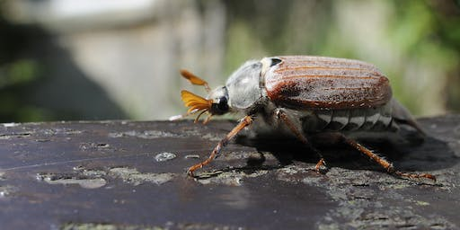 Insect ID for beginners at Lackford Lakes (EWC2806)