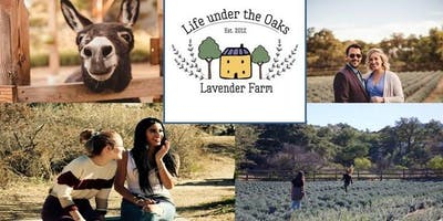 Life under the Oaks Lavender Celebration