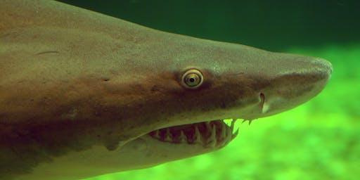 Coastal Sharks of Florida
