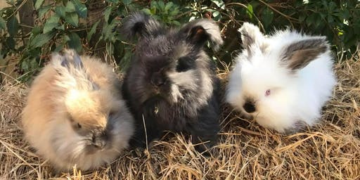 2019 All About Rabbits 4-H Day Camp