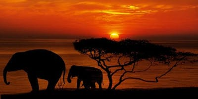 Go Touch Down Travel - 10-Day Signature Tour (Cape Town and Safari)