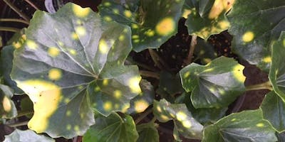 The Top 20 Perennials for Shade