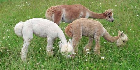 Building An Alpaca Farm Business tickets