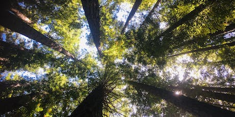 Kids Hike and Picnic  at the Redwood Forest on the 3rd of October, 2019 tickets