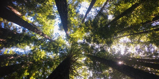 Kids Hike and Picnic  at the Redwood Forest on the 3rd of October, 2019
