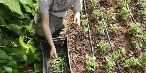 Community Farmer Day - 6 July - harvesting the summer crop