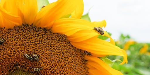 IPM for Gardening