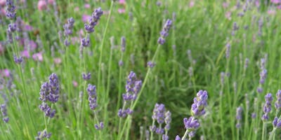 Simplifying Herbs for Your Daily Life