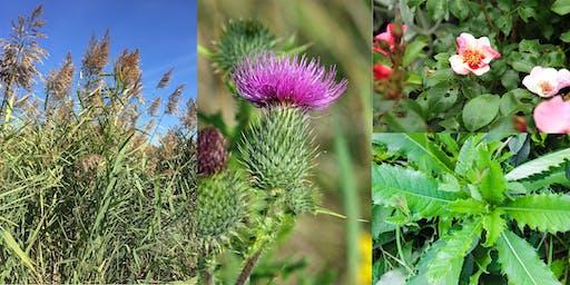 Workshop/Demo: Conquer Invasive Plants Without Toxic Pesticides - West
