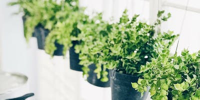 Pots in Small Spots: Container Gardening