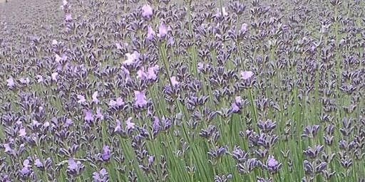 "12"" Round Lavender Wreath Workshop at Wisteria Acres"