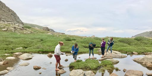 Alpine Wildflower Field Trip