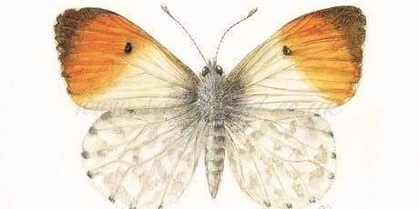 Botanical Butterfly Illustration tickets