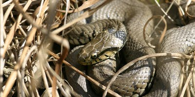 The Wonders of Wildlife ID sessions: Reptiles