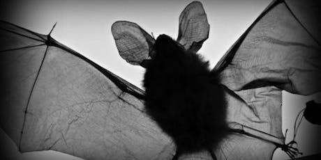 Teithiau'r Ystlumod   Bat Walks  tickets