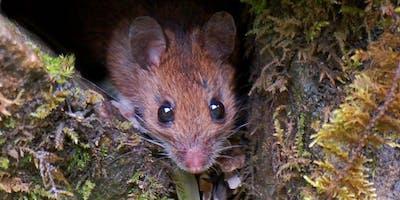 Introduction to Mammal Monitoring