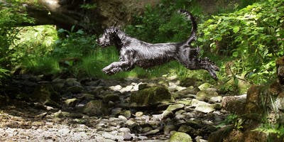 Master your craft: Pet photography workshop with Heather Beckett