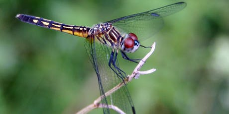 Sunday Dragonfly Discovery Walk tickets