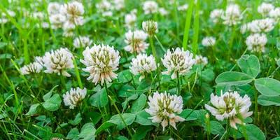 Wild, Edible & Medicinal Plant Walk