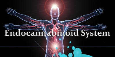 Learn to activate and support the endocannabinoid system using phytonutrients and essential oil & learn to present the material