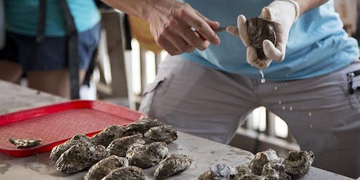 Oyster Shuck Off