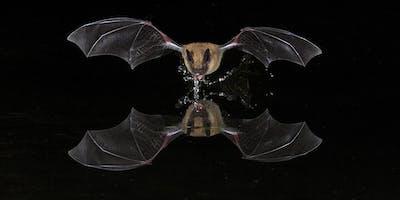 Birds & Bats of SE Arizona Photo Tour ~ 2020