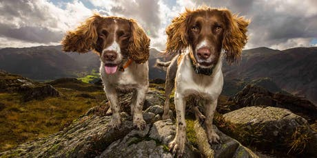 Dogs to dock tarn guided charity walk  tickets