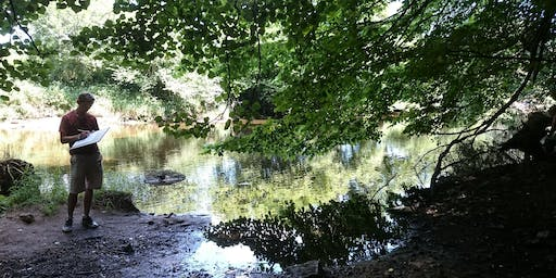 Forest Bathing - Wanders for well-being - Summer Saunters
