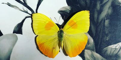 Butterflies and Beetles, creating your own shadow box with artist Tess Chodan