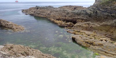 Rock Pool Tour - Swanpool to Maenporth - private booking for Walk Kernow - six person minimum