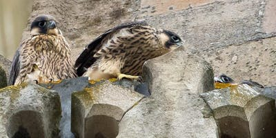 Cathedral Peregrine Walk
